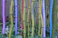 rgourley bamboo 10-16-12 no1